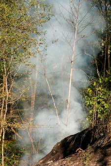 Fogo de pradaria. grama seca arde entre arbustos destruição de florestas