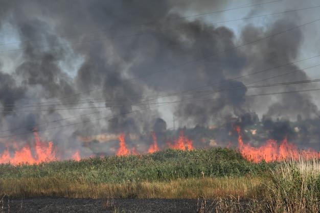 Fogo em matagais de junco ao longo da estrada secundária perto de odessa, ucrânia