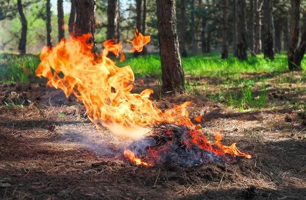 Fogo em uma floresta feita por alguém. chama para a hora do piquenique na primavera