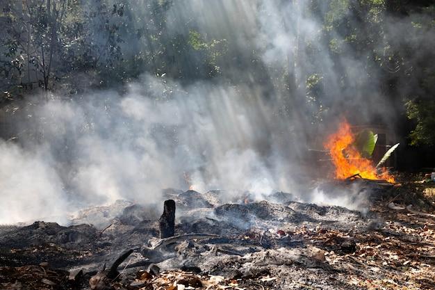 Fogo em uma floresta tropical devido ao clima quente. muita fumaça e cinzas, os raios de sol cortam as árvores.