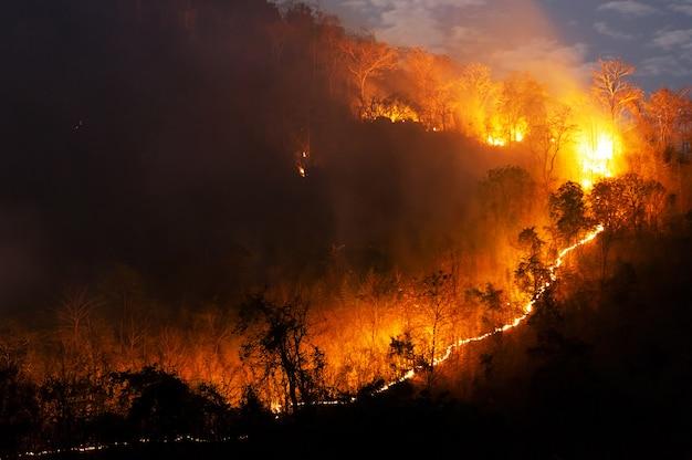 Fogo florestal