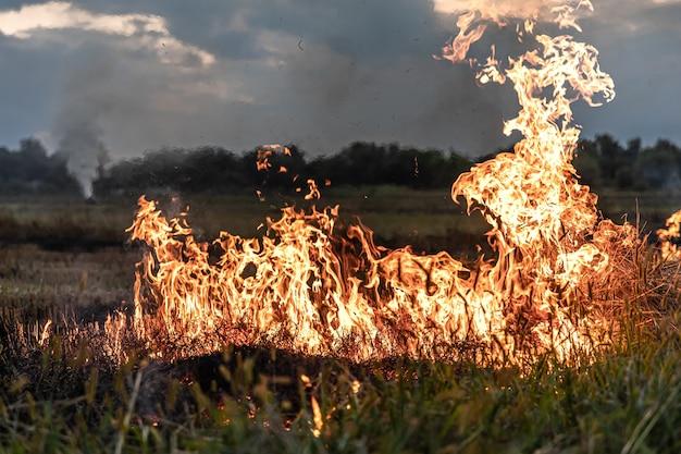 Fogo na estepe, a grama está queimando destruindo tudo em seu caminho.