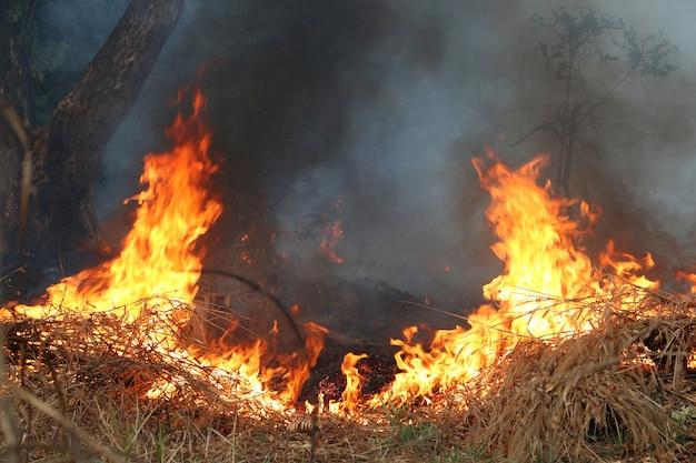 Fogo na grama seca e árvores