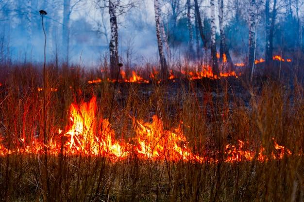 Fogo nas chamas da floresta durante um incêndio