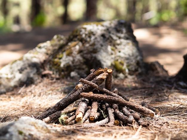 Fogueira apagada na floresta