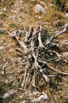 Fogueira de lenha antes de madeira dobrada em frente a uma fogueira na floresta