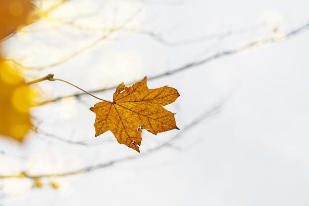 Folha amarela brilhante de outono em um galho com foco superficial