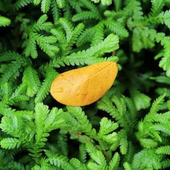 Folha amarela caída com gotas de água em um arbusto verde vibrante