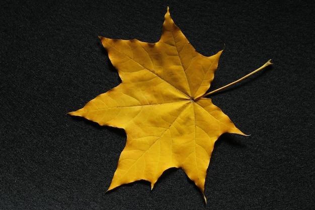 Folha amarela de bordo em preto