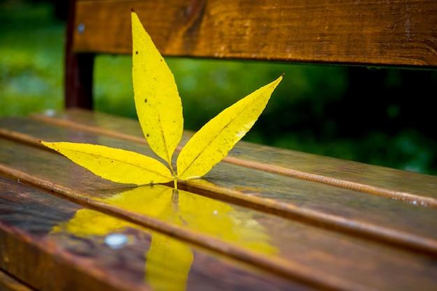 Folha amarela de folhas de outono em um banco molhado no parque