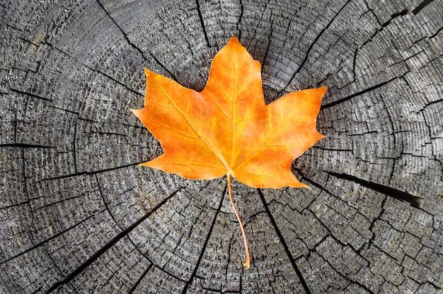 Folha amarela de outono em superfície de madeira