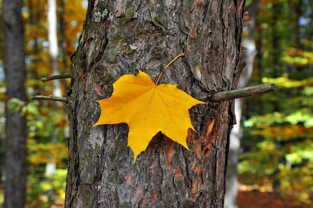 Folha amarela de outono em um tronco de árvore