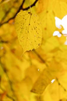 Folha amarela de outono na árvore