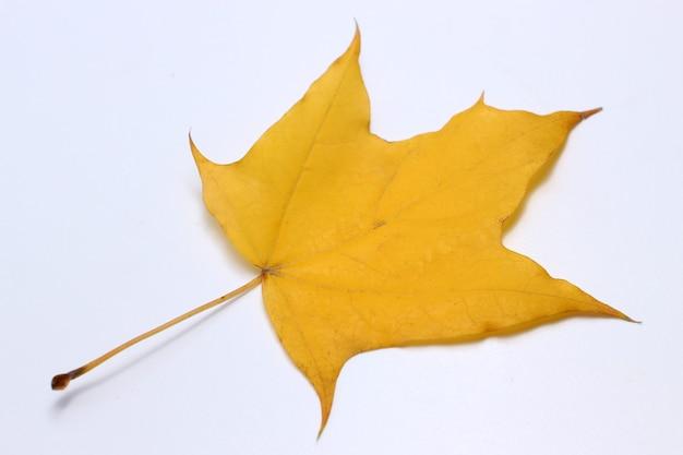 Folha amarela em um branco