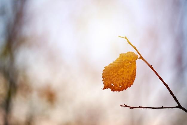Folha amarela em um galho na natureza