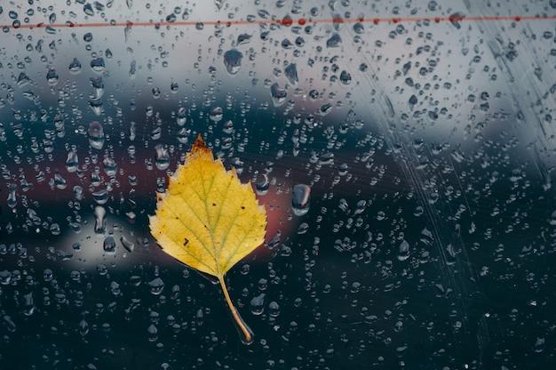 Folha amarela no vidro molhado, gotas de chuva no vidro.