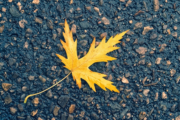 Folha amarela