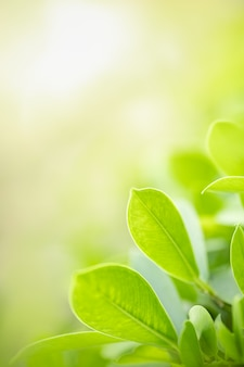 Folha bonita do verde da opinião da natureza no fundo borrado das hortaliças sob a luz solar com espaço do bokeh e da cópia.