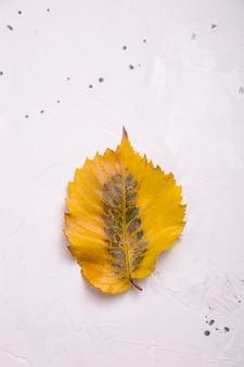 Folha caída amarela em branco