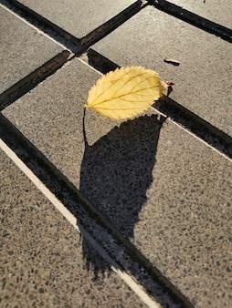 Folha caída de outono na calçada da cidade