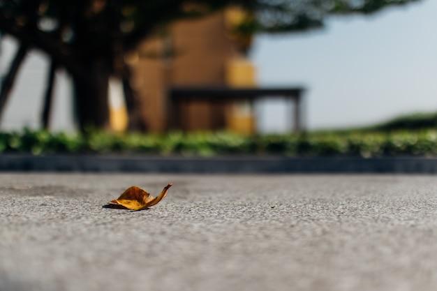 Folha caída secada amarelo no assoalho do cimento.
