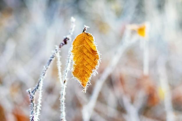 Folha coberta de geada em uma árvore com