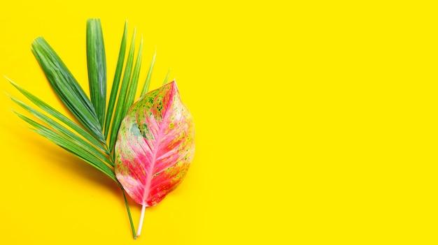 Folha de aglaonema colorido com folha de palmeira tropical em fundo amarelo. copie o espaço