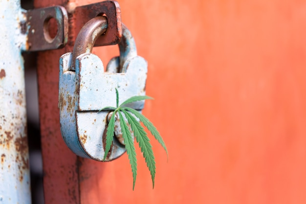 Folha de annabis no buraco da fechadura de um velho cadeado conceito de hackear a consciência por meios não tradicionais