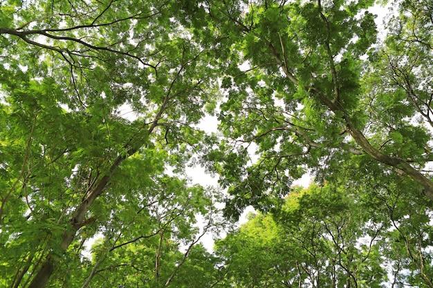 Folha de árvore e galhos no jardim