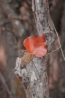 Folha de árvore vermelha na natureza no inverno