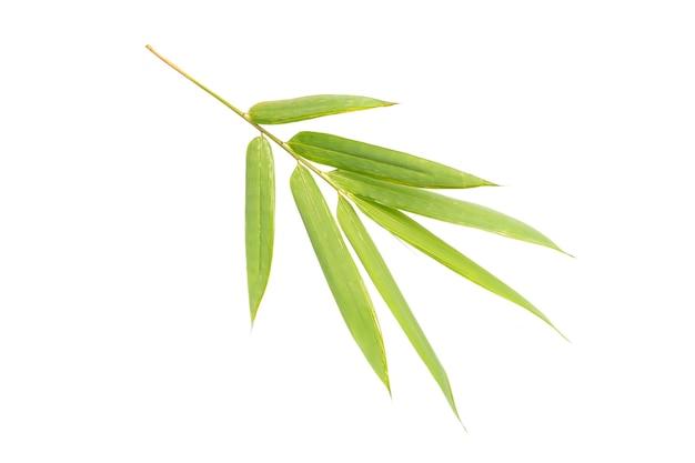 Folha de bambu isolada em fundo branco