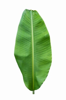 Folha de bananeira isolada em parede branca
