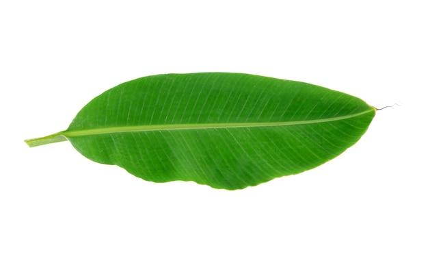 Folha de bananeira isolada