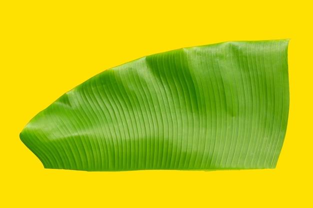Folha de bananeira tropical em fundo amarelo.