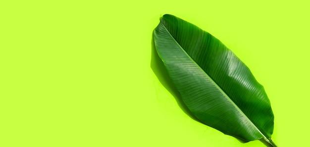 Folha de bananeira tropical em superfície verde