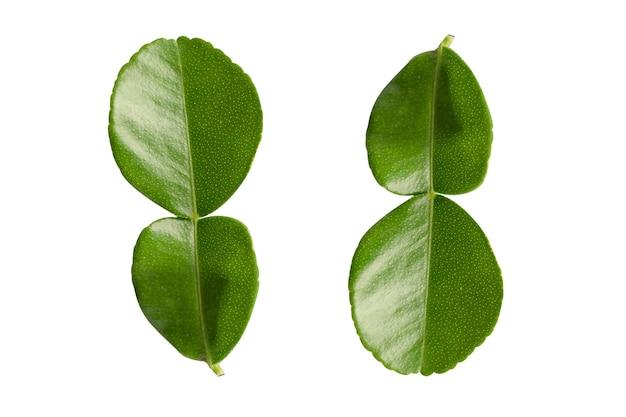 Folha de bergamota fresca ou isolado de limão kaffir em fundo branco com traçado de recorte