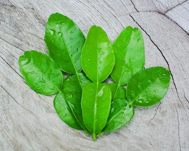 Folha de bergamota verde na madeira, folha de bergamota