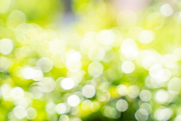 Folha de bokeh com luz solar, use para fundo abstrato.