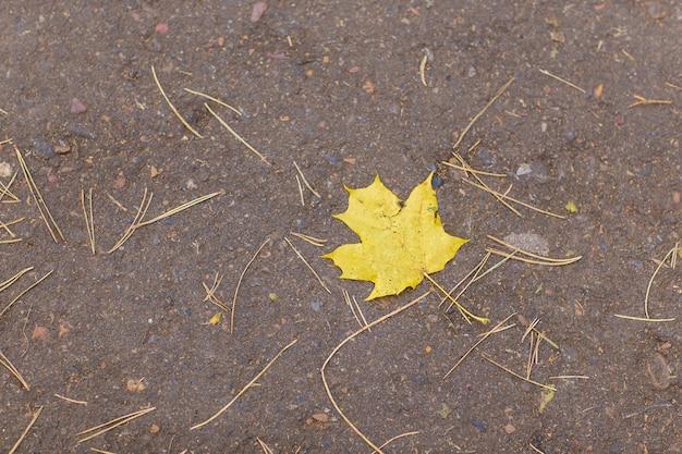 Folha de bordo amarela caída na estrada
