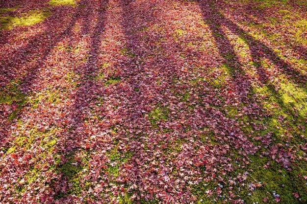 Folha de bordo colorida espalhada no chão.