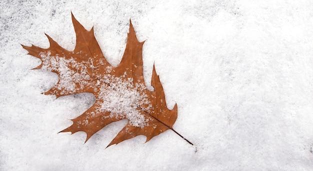 Folha de bordo em superfície com neve, layout de outono ou inverno