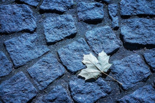 Folha de bordo em uma estrada de pedra com fundo em tons de azul