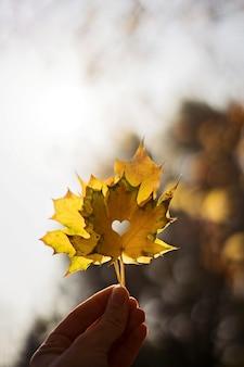 Folha de bordo em uma mão na natureza azulada. estação do outono. folha amarela