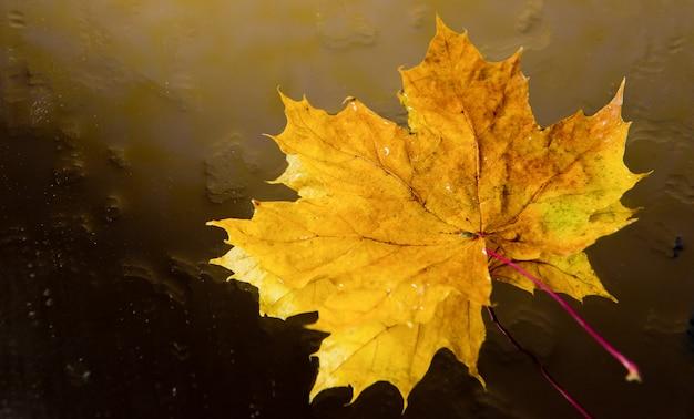 Folha de bordo laranja com pingos de chuva refletidos na água