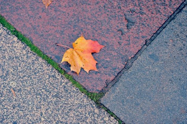 Folha de bordo outono deitado sobre o granito molhado