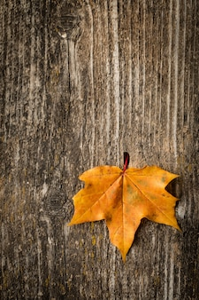 Folha de bordo outono sobre fundo de madeira velha
