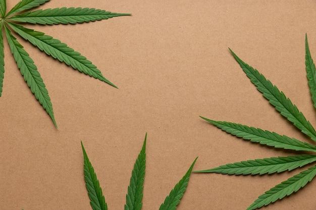 Folha de cannabis em um fundo de papelão