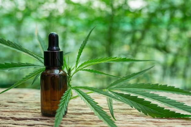 Folha de cannabis extraída do óleo de cânhamo.