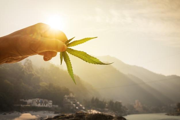 Folha de cannabis na mão no sol poente na bela paisagem montanhosa de fundo desfocado. criação de conceito de maconha, cannabis, legalização.