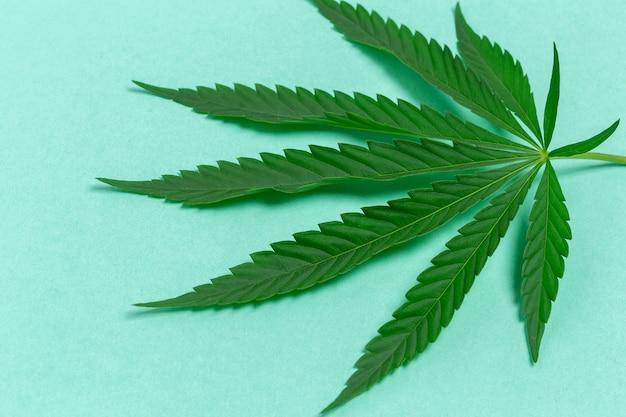 Folha de cannabis